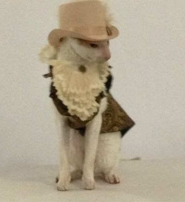 Brighton, a cream and white Cornish Rex