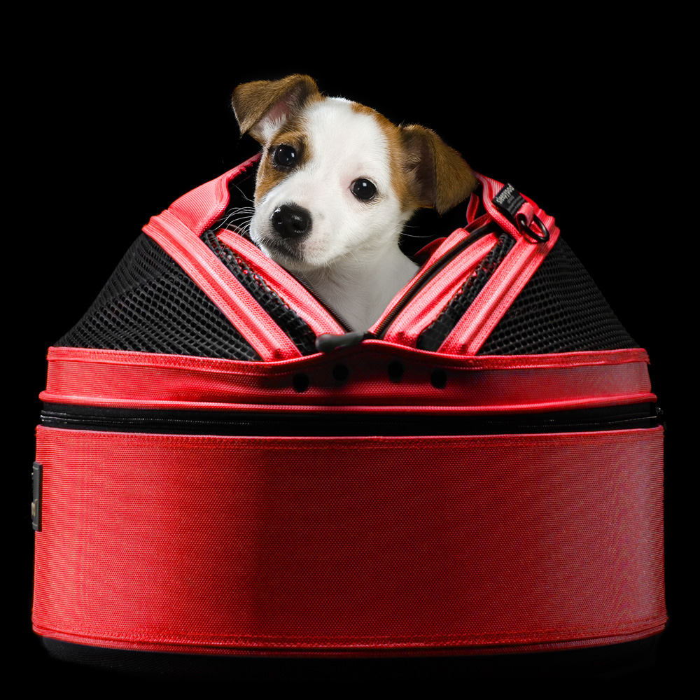 SP-RED-on_black-side_terrier