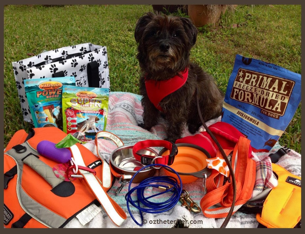 Oz the Terrier with gear for dog-friendly outdoor adventures . (photo: OzTheTerrier.com)